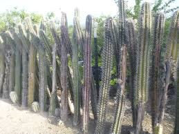Decorative Security Fencing 1000 Images About Fences And Security On Pinterest Hedges