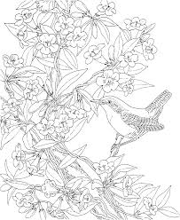 Small Picture Free Printable Coloring PageSouth Carolina State Bird and