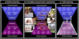 where do mirror neurons e from