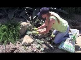 how to create a succulent pocket garden
