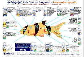 Fish Disease Chart Freshwater Aquarium Fish Freshwater