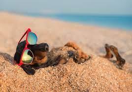 Endet der Sommer 2020 ohne eine einzige Hitzewelle?