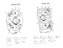 plant cell vs animal cell worksheet worksheets library  17 best images about plant and animal cells life
