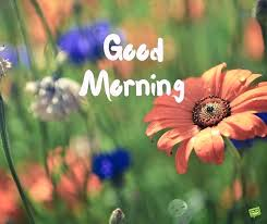 good morning nature images a wish for the new day image with field flowers good morning