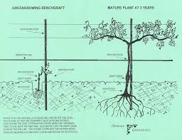 Vine Spacing Chart Resources Herrick Grapevines
