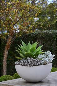 hugedomains com potted plants outdoor