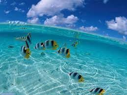 Sea Computer Wallpapers - Top Free Sea ...
