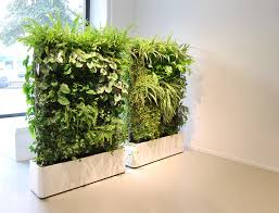 plants for office cubicle. Green Plant Wall Divider Using White Wooden Planter As Well F Planters Indoor Gold And. Office Plants For Cubicle