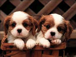 Cute Puppies Wallpapers for Desktop on ...