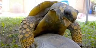 Image result for Reptile Alerts : Steven Jay Jarrot.
