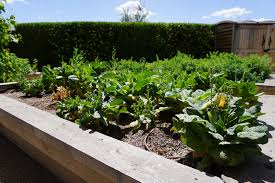 luxury housing in arizona provides many opportunities including the option to plant an expansive vegetable garden in your spacious backyard