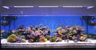 Fish Tank Fish Tank Wide Fish Tank Ft Tanks For Sale36 Salewide Sale X High