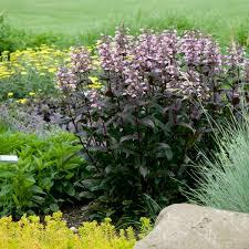 fine gardeners brookline newton needham ma