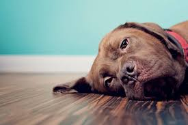 Pets Can Experience Grief Heres What You Should Know About