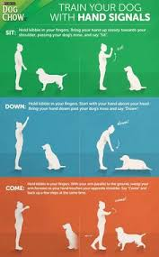 Dog Training Hand Signals Chart Pdf 81 Best Training Tips Images In 2019 Doggies Dogs Pet Dogs