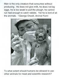 argumentative essay over animal rights