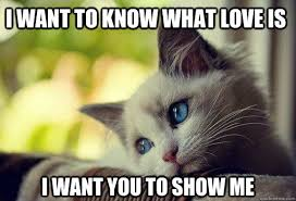 i want to know what love is i want you to show me - Sad cat ... via Relatably.com