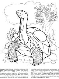 Small Picture 125 best snake coloring pages KIDS images on Pinterest Coloring