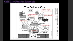 Cell City Analogy Examples Cell City Analogy Examples All New Resume Examples