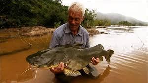 amazon river catfish. Perfect Catfish Jeremy Wade With A Jau Catfish Throughout Amazon River I