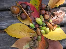 「実りの秋」の画像検索結果