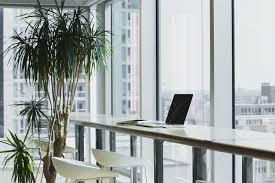 if you don t want to add clutter to your employees desks you could try having one indoor tree for the entire office not only is this an easy option