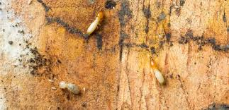 Image result for get estimates from a few different termite control services