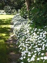 Texas Shade Garden Design The Best Central Texas Landscaping Ideas For Garden 10