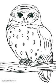 Coloring Pages Owl Coloring Sheets Preschool Pages For Kids Cute
