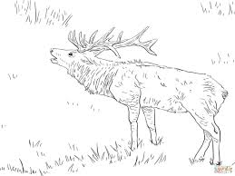 Small Picture Printable Coloring Pages Elk Coloring Page Free Printable