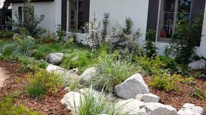 a mix of dry shade plants california native dry shade garden ep 03