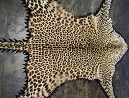leopard skin rug with head for