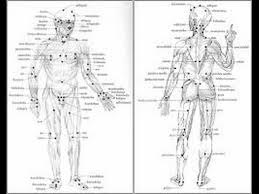 Pressure Point Chart Martial Arts 64 Punctual Human Body Pressure Points