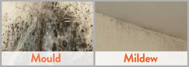clean first and foremost it s important that we know and understand the foes we are facing mould is a type of fungi that has a fuzzy type appearance