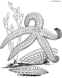Small Picture Printable 36 Starfish Coloring Pages 8732 Rpm Coloring Pages