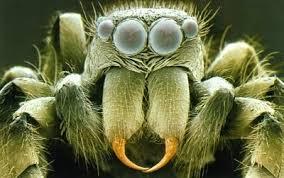 Los insectos más comunes vistos bajo el microscopio. - ... en Taringa!