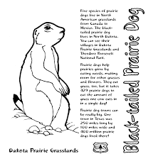 Small Picture Prairie Dog Colouring Pages Prairie Dog Coloring Pages To Print In