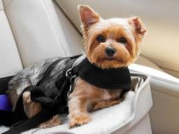 the 8 best dog seat covers