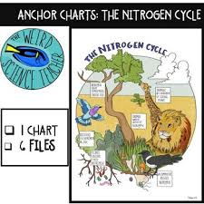 Science Scaffolded Notes Anchor Chart The Nitrogen Cycle