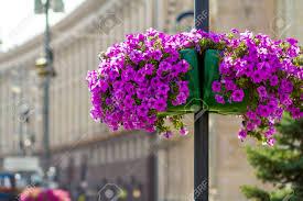 Purple Flower Pots Amazoncom Purple Green Plant Ceramic Flower
