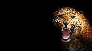res 1080x1920 cool cheetah wallpaper