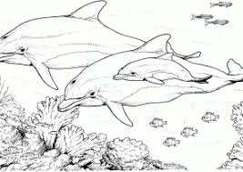 Small Picture Dolphin Coloring Pages Coloring4Freecom