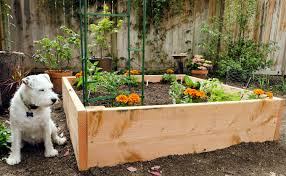 4x4 raised vegetable garden design with soil mix and trellis plus wooden fence with plants growing on it ideas