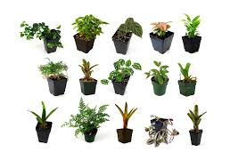 great office plants. Articles With Best Office Plants That Need No Sunlight Tag Great L