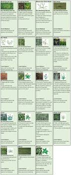 Paul Munns Blog Weeds Category Weed Identification Chart