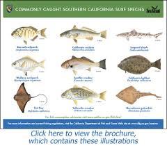California Beach Fishing