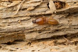 Image result for termites will eat away at tree trunks