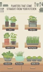 Kitchen Scrap Gardening Indoor Edible Plants Fixcom