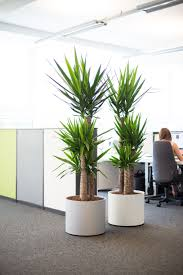 Interior office plants Green Image Of Interior Workspace With Potted Office Plants Pinterest Corporate Office Plants Professional Interior Plant Displays