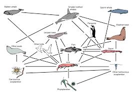 antarctic ocean food web